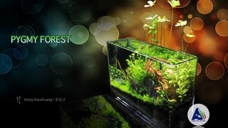 Nano Planted Aquarium - Pygmy Forest | 碧迷之林