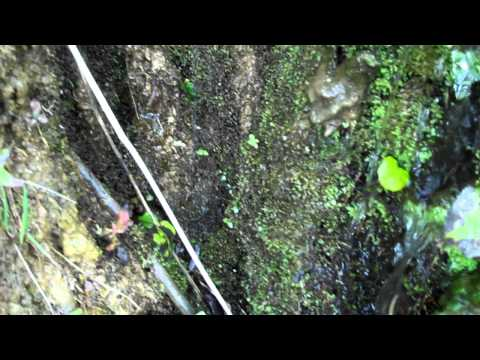 Tivoli lakes   Albany New York  Natural spring in side of a hill