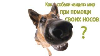 Как собаки видят мир при помощи своего носа?