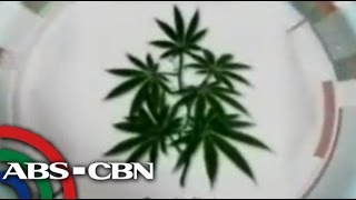 TV Patrol Pampanga - July 10, 2014