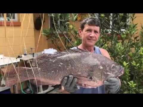 How to Fillet Kitty Grouper