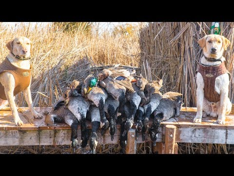 My BEST Duck And Goose Hunt Yet! - Duck Hunting 2017