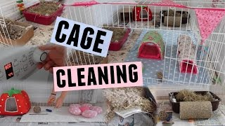GUINEA PIG CAGE CLEANING | Hamster HorsesandCats
