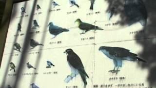 岐阜公園 金華山で観察できる野鳥の種類が説明してあります。岐阜城山頂...