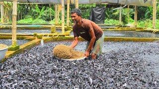 Những Trại Cá Có CÁ NHIỀU HƠN NƯỚC Trên Thế Giới