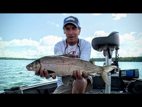 Understanding Whitefish — Fishing Edge TV