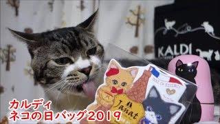 カレンダーをベロベロ攻撃!【カルディ】2019年ネコの日バッグの中身&猫グッズをリキちゃんと一緒に見てみよう☆猫と一緒に商品紹介・猫動画