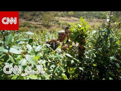 نظرة لـCNN على إدمان القات في اليمن  - نشر قبل 3 ساعة