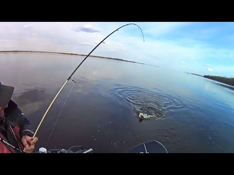 ЭТА ПРИМАНКА опять сделала рыбалку! Ловля СУДАКА во время разлива