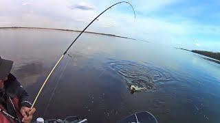 ЭТА ПРИМАНКА опять сделала рыбалку Ловля СУДАКА во время разлива