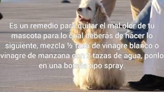 remedio para quitar el mal olor de tu mascota ama a tu mascota es parte de ti