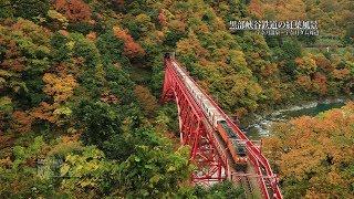 [富山]黒部峡谷鉄道の紅葉風景[UHD4K顔声曲無-EOS R] - Autumn leaves in Kurobe gorge