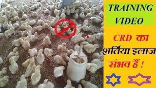 CRD का शर्तिया इलाज ! STOP CRD TO COME YOUR  FARM AGAIN AND AGAIN