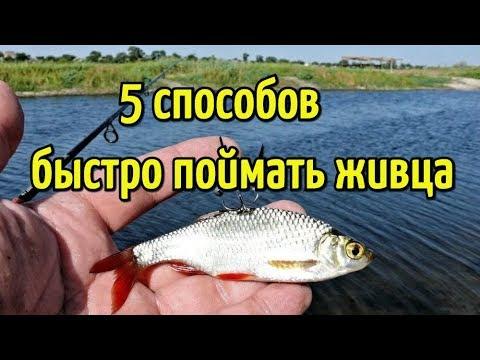 Как быстро поймать живца? Пять простых способов ловли