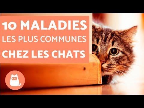 Les 10 Maladies Les Plus Communes Chez Les Chats