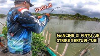 Gambar cover Mancing Pake Udang Hidup !! Strike Bertubi-Tubi Umpan Sampe Habis