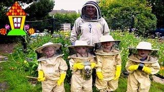 Воровство пчел. Новый отводок чуть не погиб.