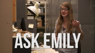 ask emily 1