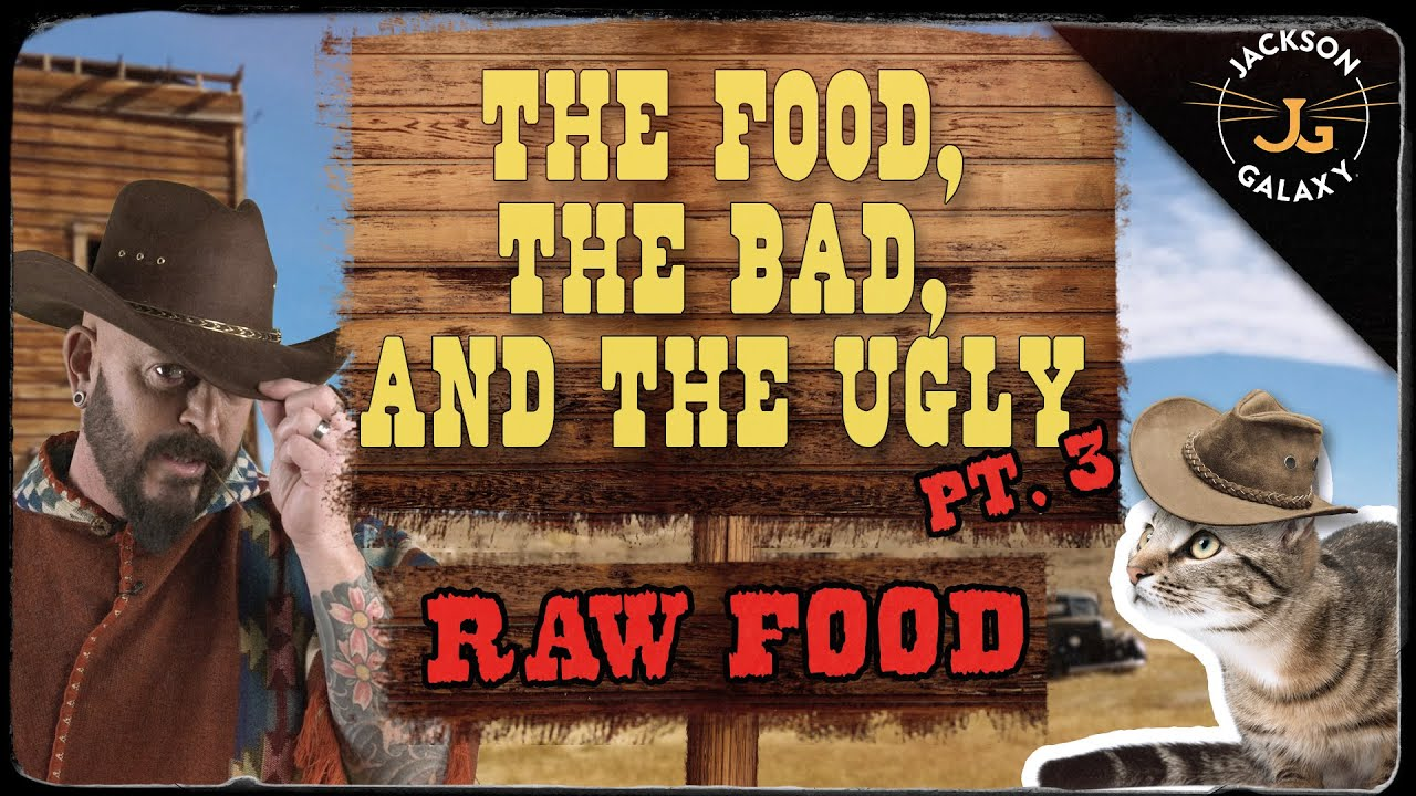 Cats & Raw Food: What you need to know! - download from YouTube for free