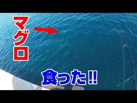 堤防でまさかの「マグロ」が釣れた‼
