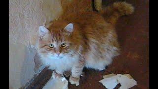 Cat and overhaul of the apartment - кот делает капитальный ремонт в квартире