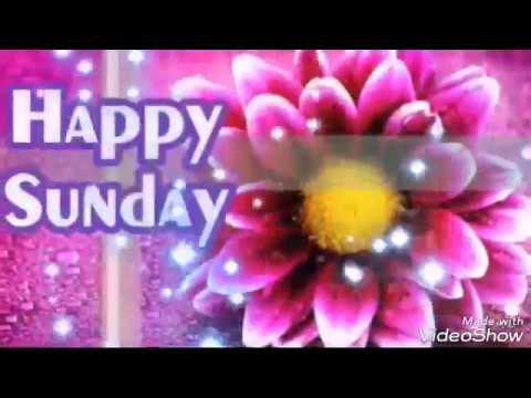 Good Morning Happy Sunday Status Video Whatsapp Status