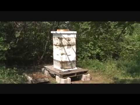 Bee hives not opened for 10 years scottsbluff nebraska youtube sciox Choice Image