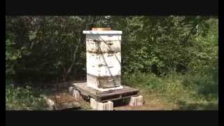 Bee Hives Not Opened for 10+ Years Scottsbluff, Nebraska