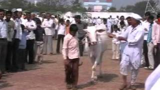 State Level Cattle and Horse Exibition 2009 held at Shirgonda, MH, India