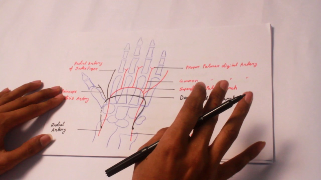 Anatomyartery Supply Of The Whole Body Part 1 Youtube