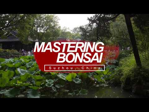 Suzhou, China Travel: Master Class in Bonsai