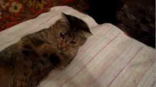 Кошка Ляля балдеет после сна...