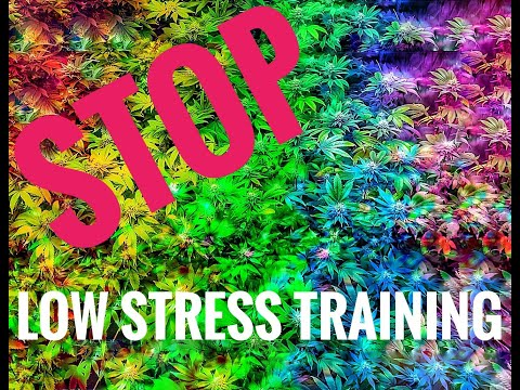 Stop Low Stress Training your Cannabis plants