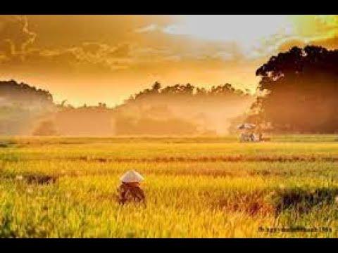 Không Xem được Video Trên Máy Tính - Sửa Lỗi Window Media Player Server Execution Failed