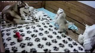 Салли играет с малышами! Хасята онлайн: Цветы Ванили