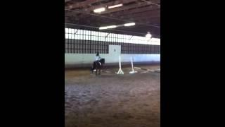 Charlotte horseback riding