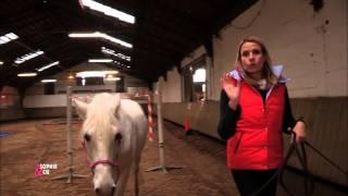 Top conseils pour que votre cheval n'ait plus peur de rien
