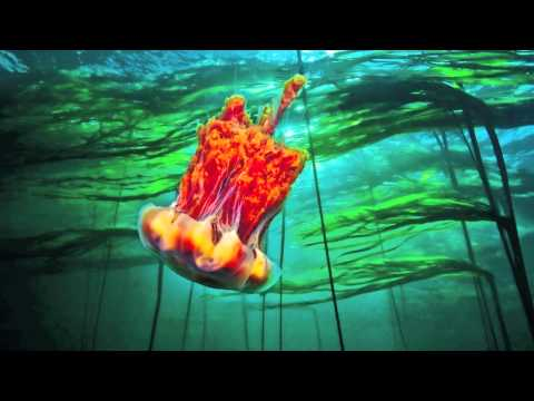 Pacific Underwater Calendar: Kelp Forest