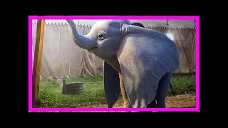 Breaking News | First look at Dumbo from Tim Burton's live-action movie