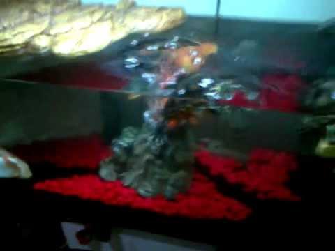 Acquario etnico per tartarughe d 39 acqua youtube for Acquario esterno per tartarughe