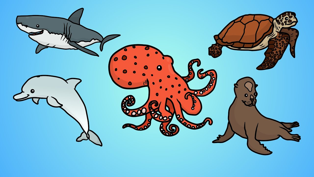 Uncategorized Draw Ocean Animals draw five how to ocean animals youtube