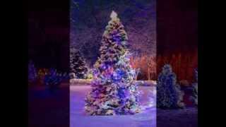 KIM WESTON~WISH YOU A MERRY CHRISTMAS