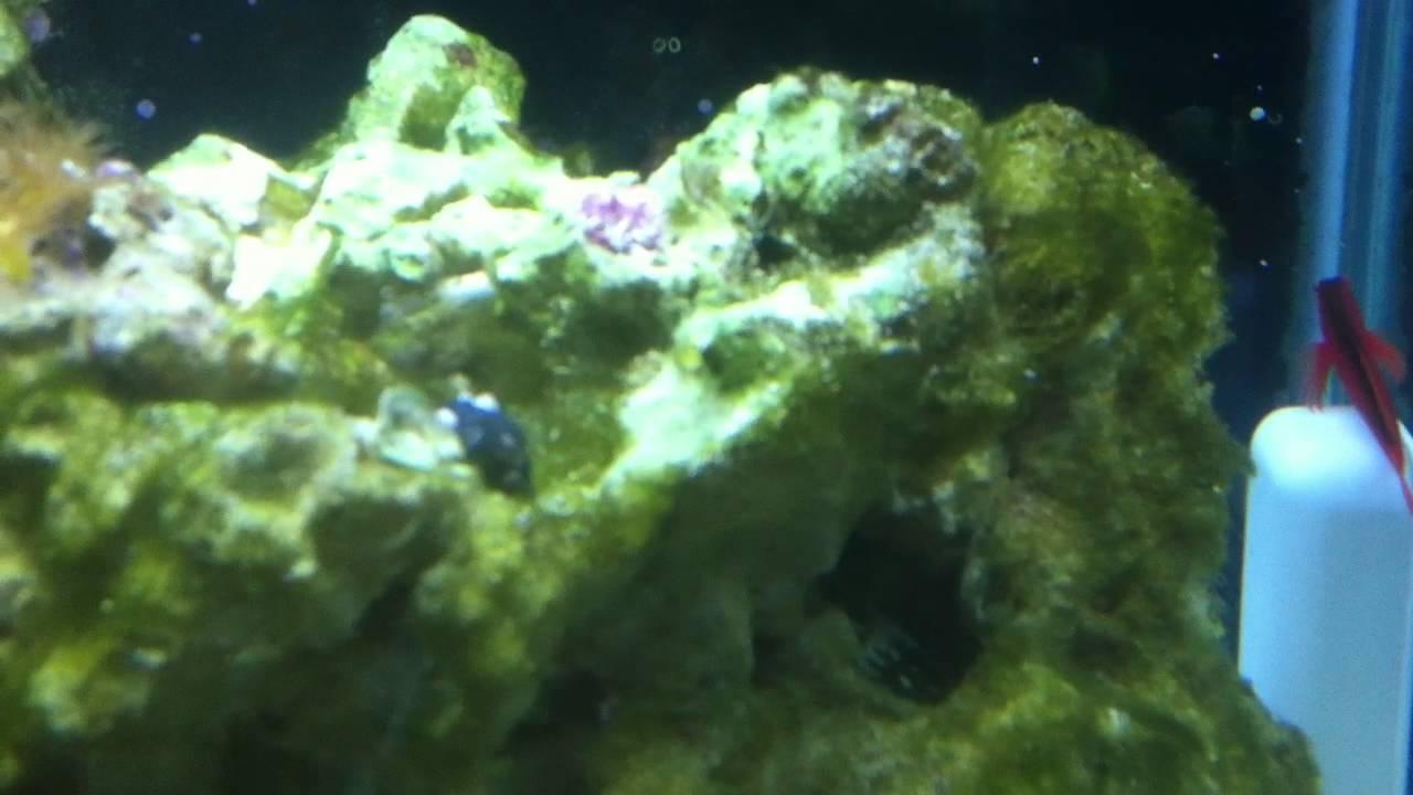 Semi aggressive 75 gallon saltwater fish tank youtube for Semi aggressive fish