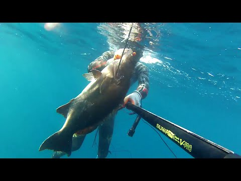 algeria spearfishing 2015 by yacine and abdennour