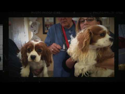 61 Puppy Mill Dogs Saved!