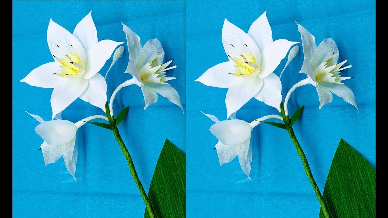 How To Make Crepe Paper Flowers Amazon Lily Eucharis Grandiflora
