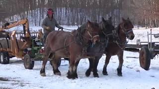 Draft Horse Logging - Managing Woods in Wisconsin (Legacy Logging)