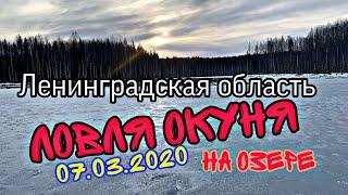 Ловля окуня на озере Зимняя рыбалка в Ленинградской области Зимний окунь