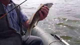 Судак на спиннинг, рыбалка в Донецкой области.
