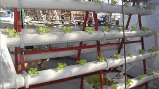 roa biyoteknoloji akan su kültürü marul yetiştiriciliği.wmv